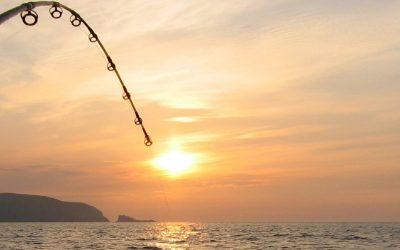 Eenvoudig vissen in de zomer
