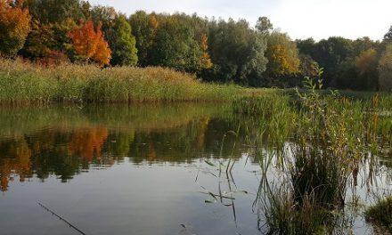 Vissen in de herfst.
